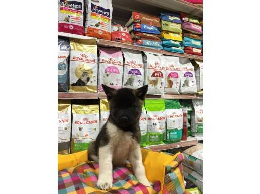 K9 VONALP PET MALL OF İST ŞUBE