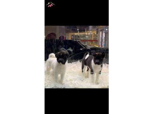 Mall of istanbul Von Alp Pet