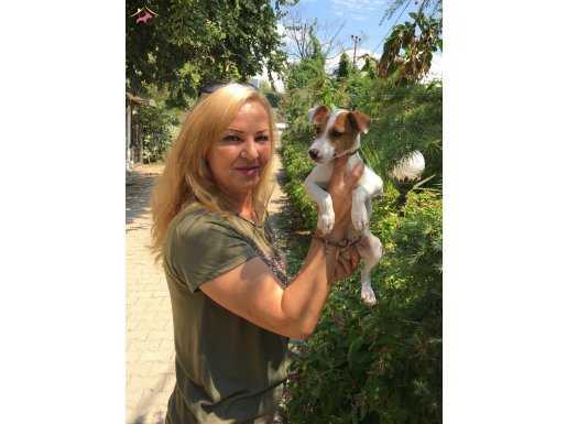 Irk Garantili Maskeli Jack Russel Terrier Yavrularımız