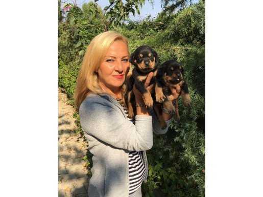 Koca Kafa Muhteşem Rottweiler yavrularımız