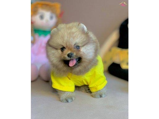 Teddy bear boo yavrular