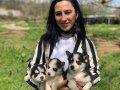 Husky yavrular sağlık ve ırk garantilidir