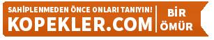 OnlineReklam